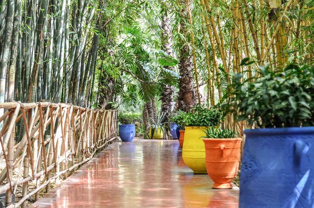 jardin-majorelle-planten