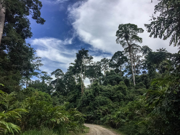 jungle-danum-valley