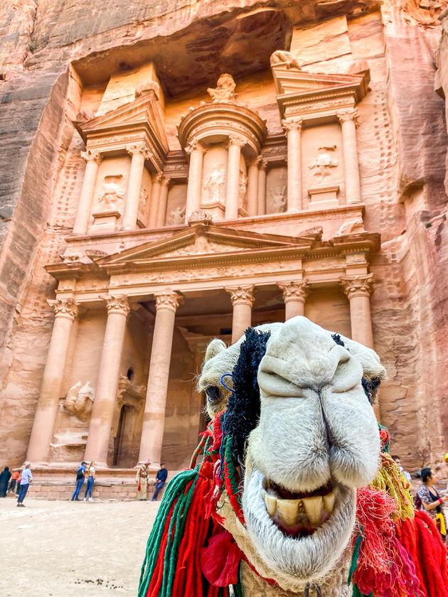 kameel-petra