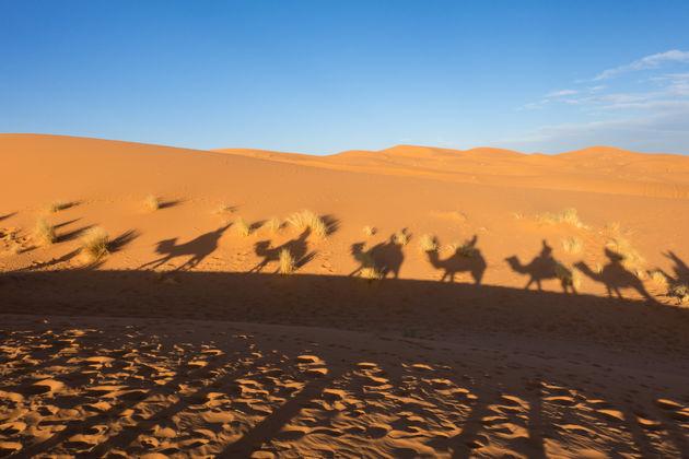 kameel-safari-merzouga