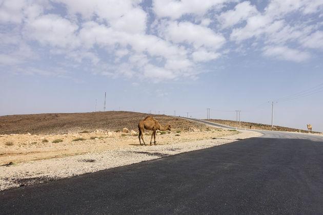 kamelen-weg-jordanie