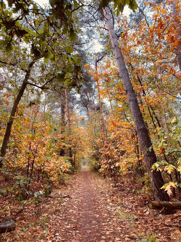kempen-broek-herfst