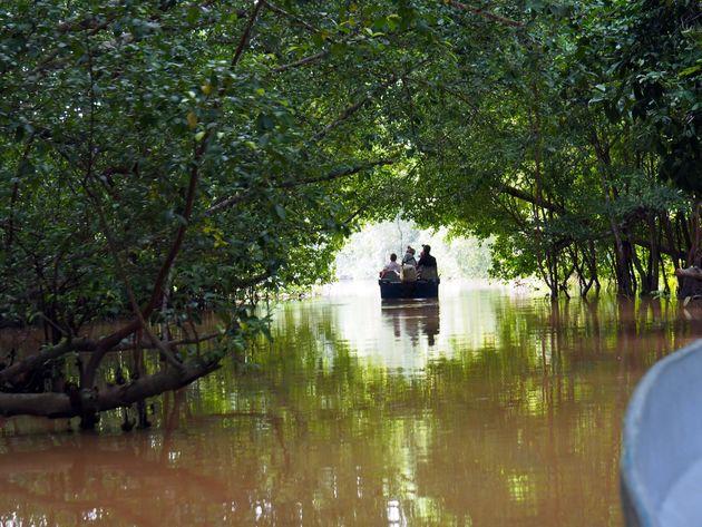 Kinabatangan-rivier-borneo