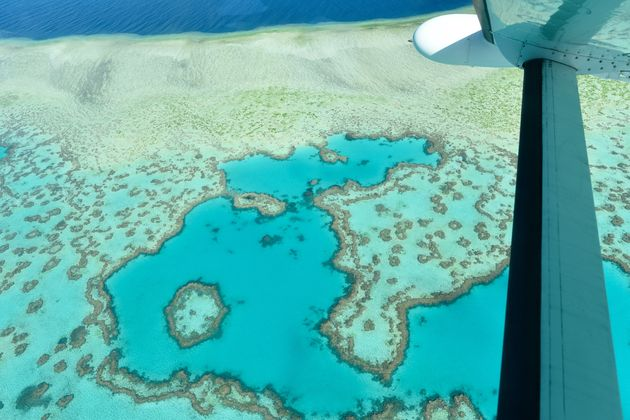 koraal-great-barrier-reef