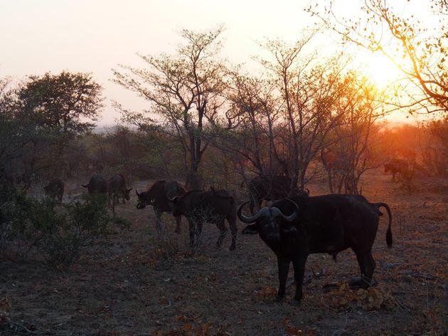 krugerpark-zuid-afrika-11