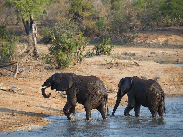 krugerpark-zuid-afrika-14