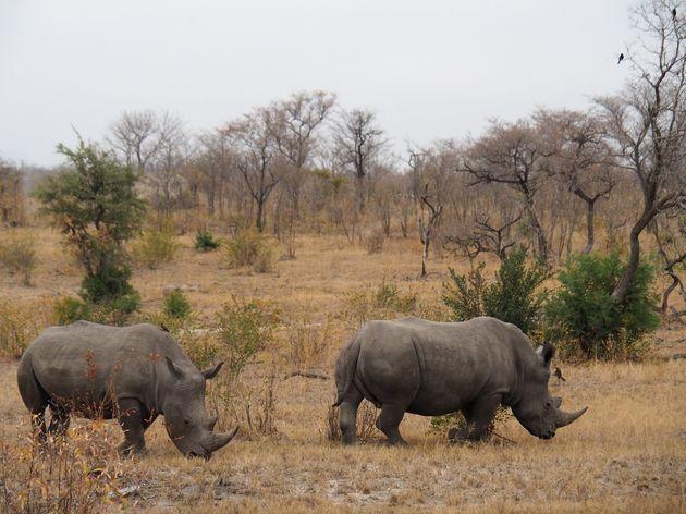 krugerpark-zuid-afrika-15