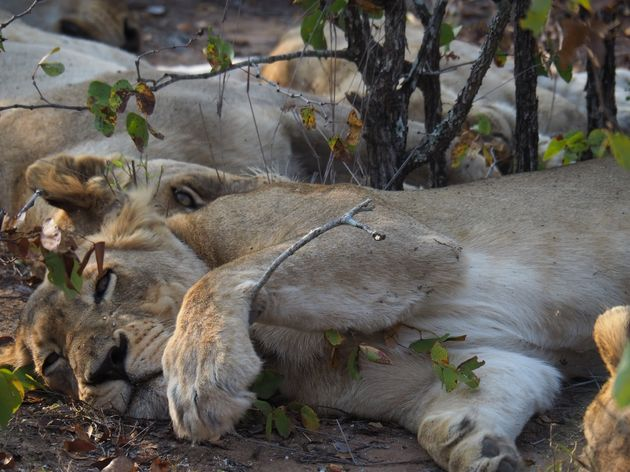 krugerpark-zuid-afrika-18