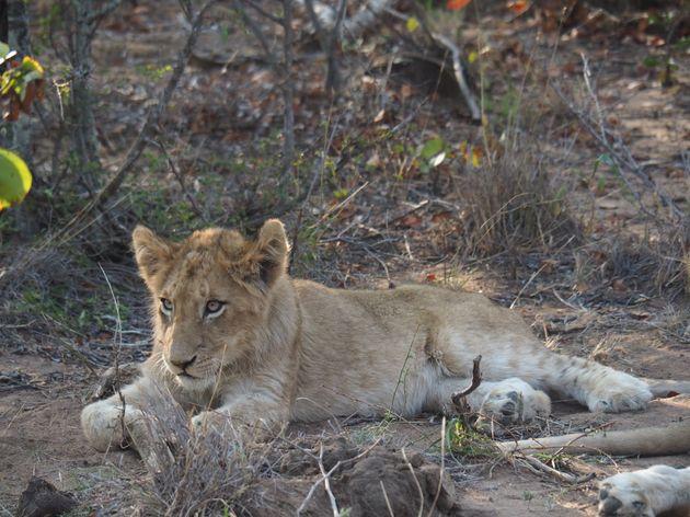 krugerpark-zuid-afrika-19