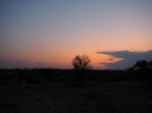 krugerpark-zuid-afrika-30