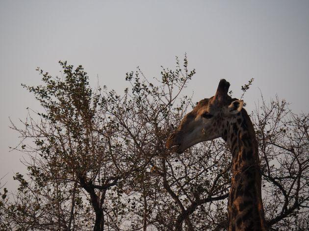 krugerpark-zuid-afrika-8