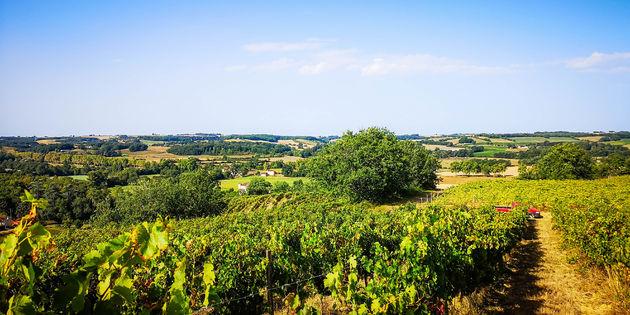 la-romieu-wijnvelden