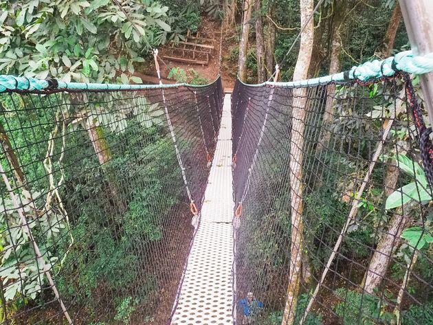 Laatste deel loopbrug Nyungwe Rwanda