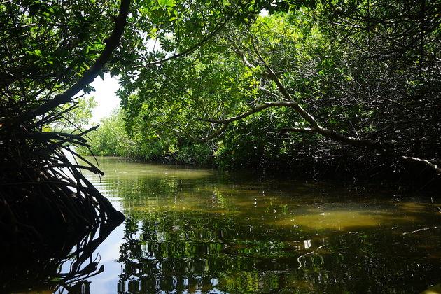 Lac-Bay-Kanoen-Mangrove