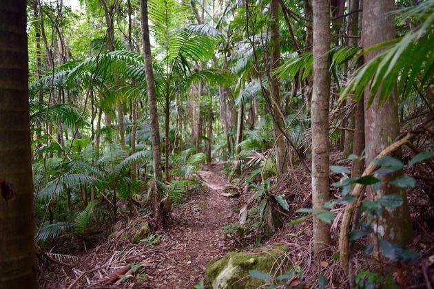 lamington-park-regenwoud