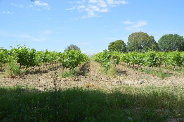 landbouwgrond-turkije