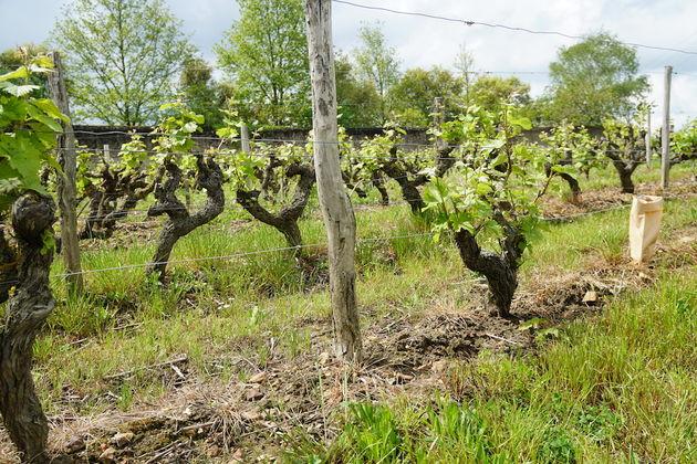 Le_Clos_de_ l_Epinay_Pauline_wijn