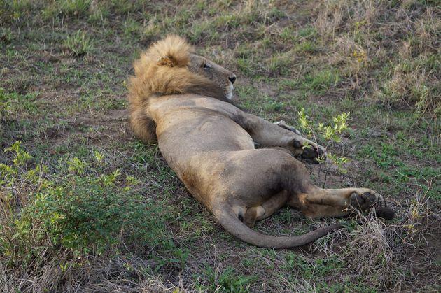 leeuw-mukumi-safari