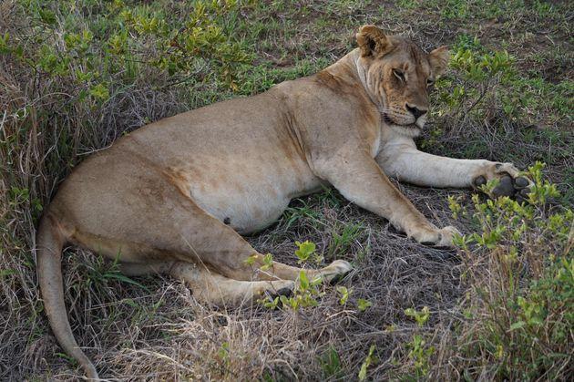 leeuwin-mukumi-safari