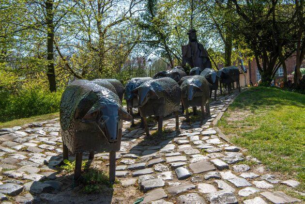 lier-schapen