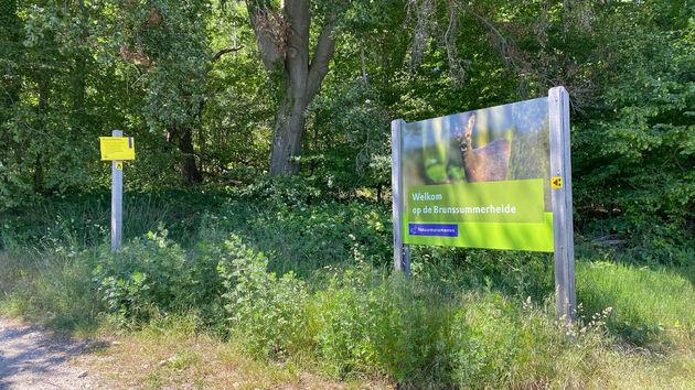 limburg-wandelen-brunssummerheide