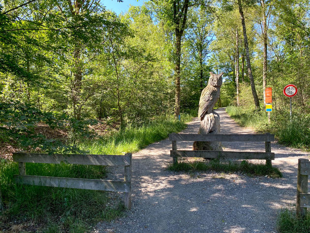 limburg-wandelen-groote-peel