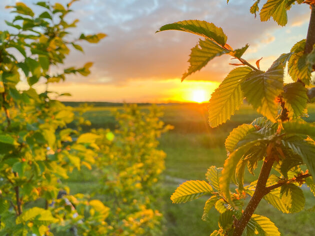 Limburg-zon-onder