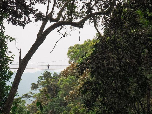 Loopbrug Canopy Walk Nyungwe National Park Rwanda