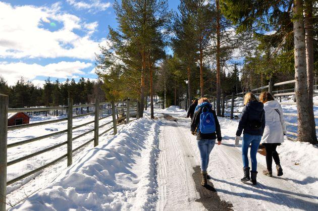 lycksele-zoo-zweden