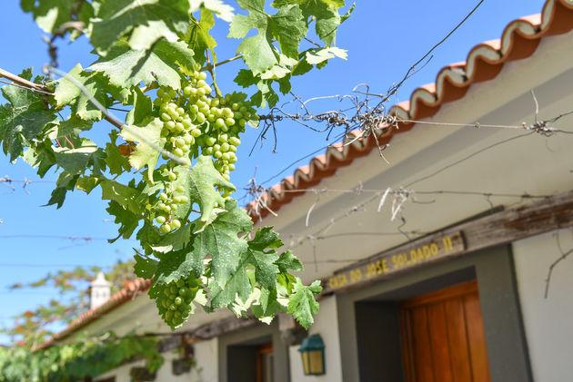 madeira-wijn-faja-dos-padres