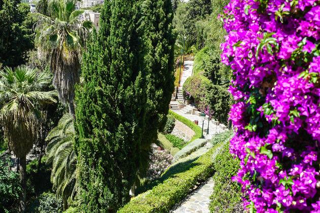 Malaga prachtige bloemen