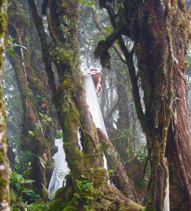 maleisie-mossy-forest