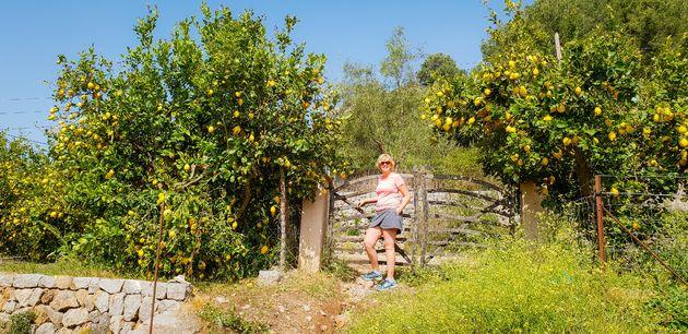 mallorca-citroengaard