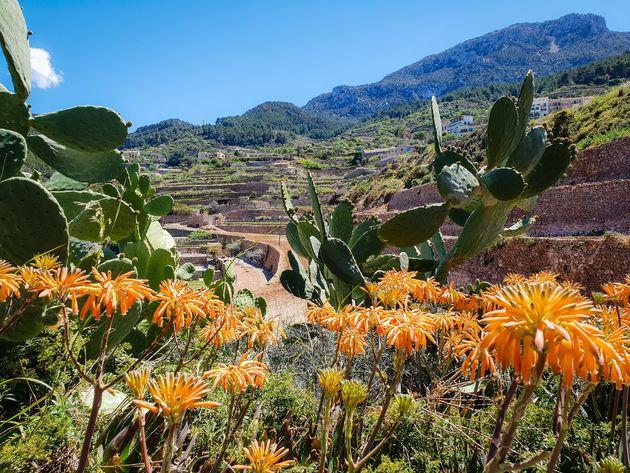 mallorca-hiken-bloemen