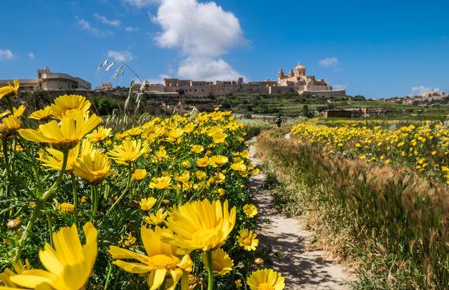 malta-bloemen