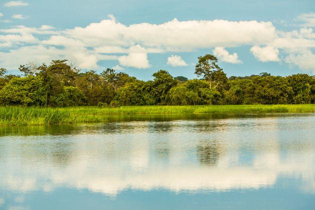 Mamirauá-brazilie