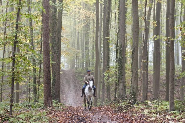 mand-paard-bos