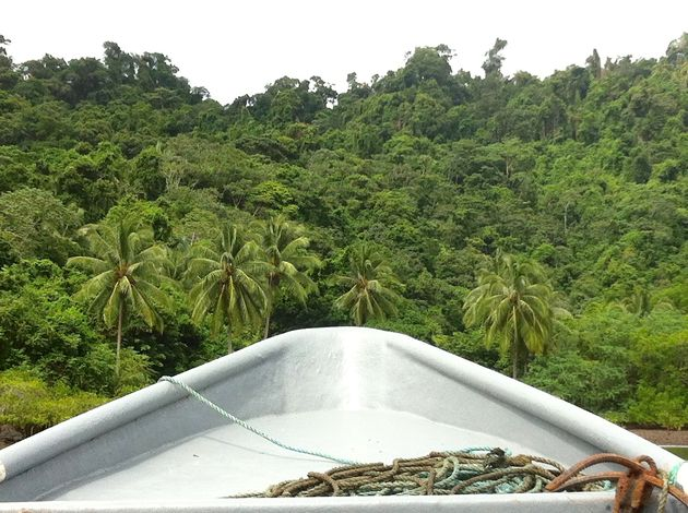 Mangrove-coiba