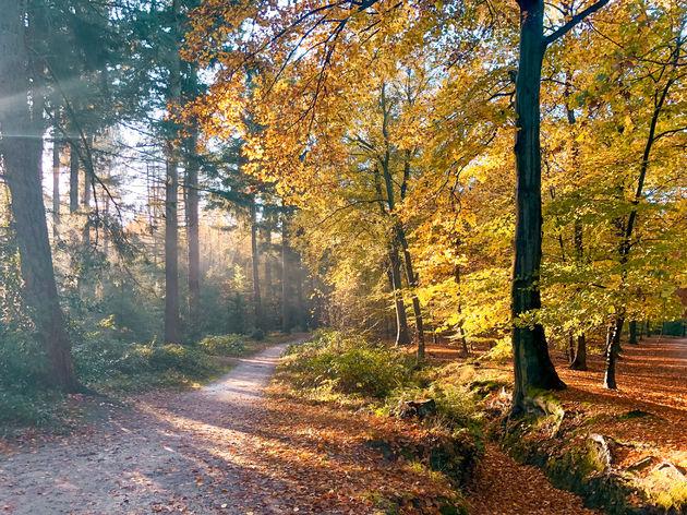 mastbos-herfst