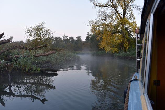 mist-ochtend-biesbosch