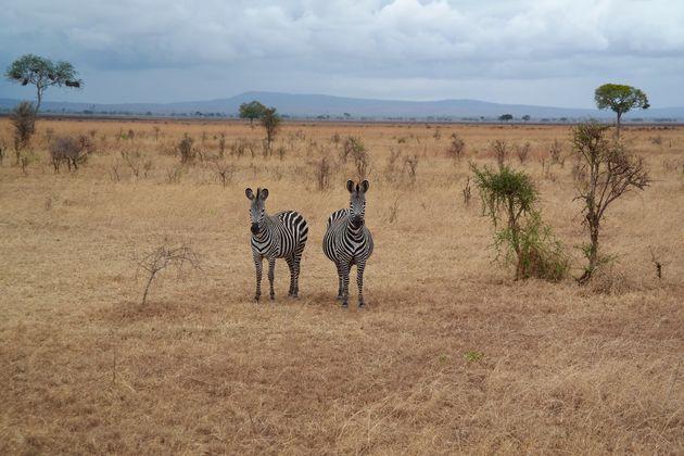 mooiste-nationale-parken-tanzania