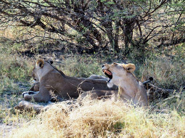 Moremi Game Reserve (1)