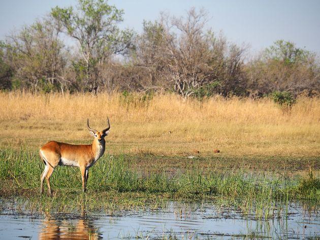 Moremi Game Reserve (13)