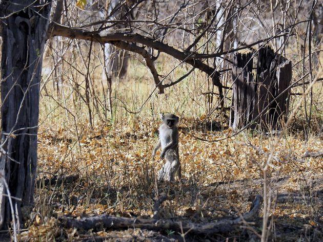 Moremi Game Reserve (16)