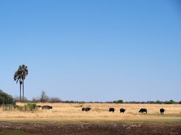 Moremi Game Reserve (20)