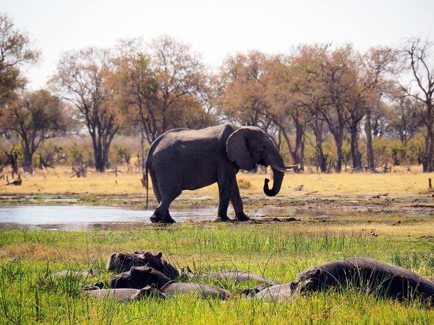Moremi Game Reserve (4)