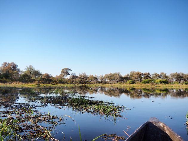 Moremi Game Reserve (8)