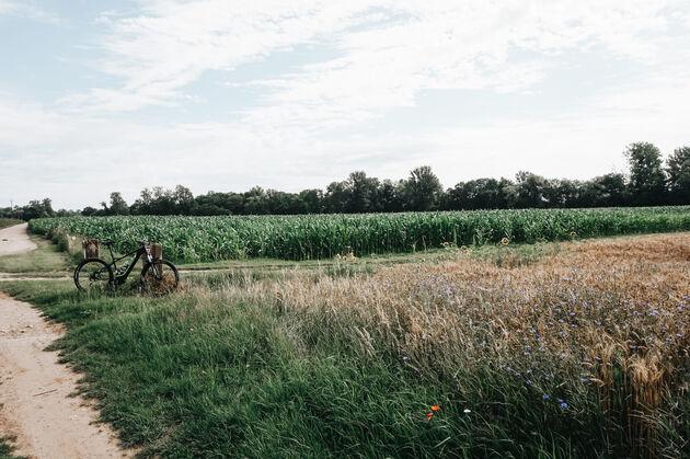 mountainbike-sancerre-wijnvelden
