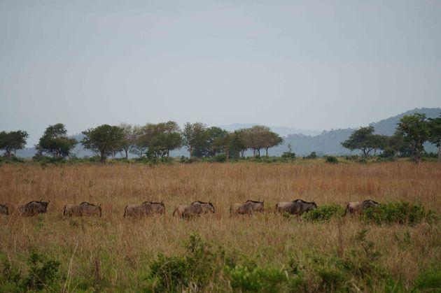 mukumi-safari-1