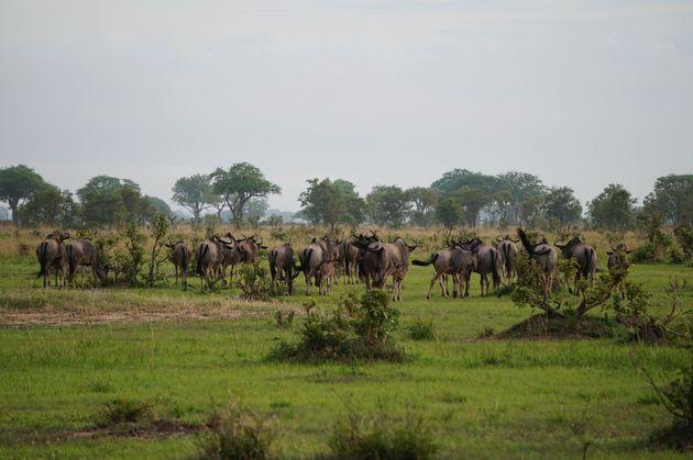 mukumi-safari-2